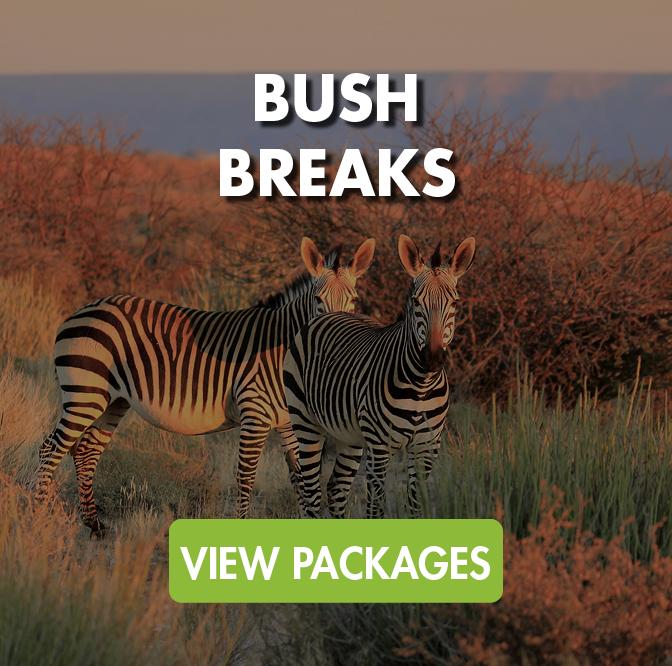 Bush Breaks